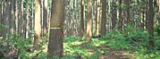 間伐材などの有効利用で森林再生とエネルギー問題の両立を